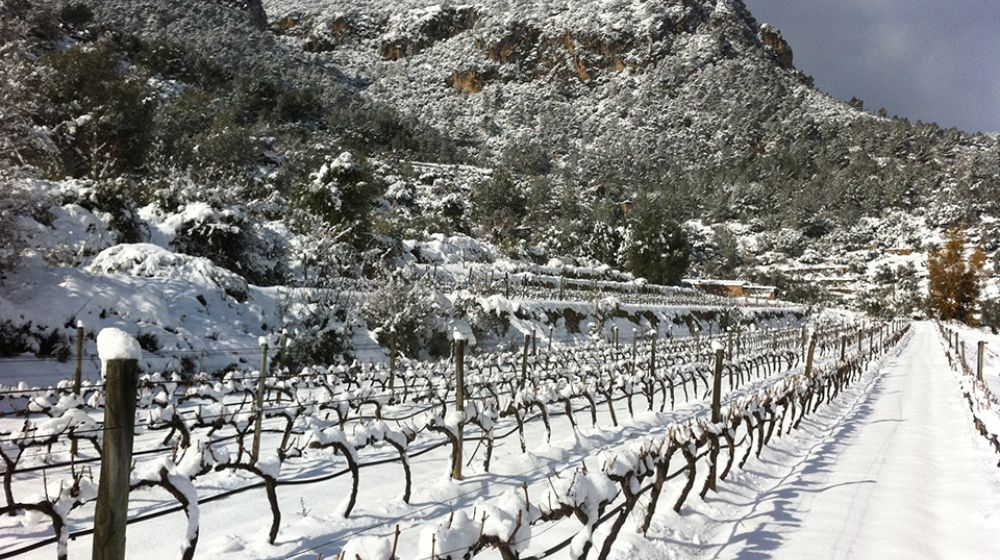 All Year Wine Routes Mallorca